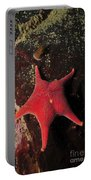 Red Sea Star And Limpet On Brown Rock Portable Battery Charger