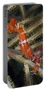 Red Seahorse On Caribbean Reef Portable Battery Charger