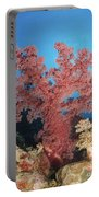 Red Soft Coral,  Australia Portable Battery Charger