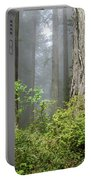 Redwoods In May Portable Battery Charger