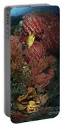 Reef Sponge Coral And Yellow Fish Portable Battery Charger