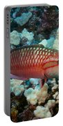 Ringtail Wrasse Portable Battery Charger