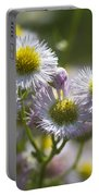 Robin's Plantain - Alabama Wildflowers Portable Battery Charger