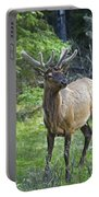 Roe Deer In Forest, Canadian Portable Battery Charger
