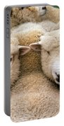 Romney Sheep Portable Battery Charger