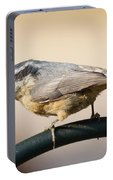 Rose Breasted Nuthatch Portable Battery Charger