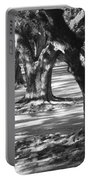 Row Of Oaks - Black And White Portable Battery Charger