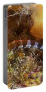 Saddled Blenny, Bonaire, Caribbean Portable Battery Charger