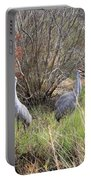 Sandhill Cranes In Colorful Marsh Portable Battery Charger
