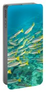 Schooling Bigeye Snappers Portable Battery Charger