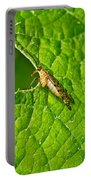 Scorpion Fly Nosing Around Portable Battery Charger