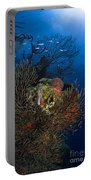 Sea Fan Seascape, Belize Portable Battery Charger