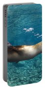 Sea Lion Blowing Bubbles, Los Islotes Portable Battery Charger