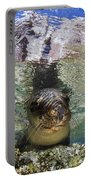 Sea Lion Portrait, Los Islotes, La Paz Portable Battery Charger by Todd Winner