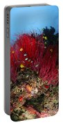 Sea Whips And Soft Coral, Fiji Portable Battery Charger
