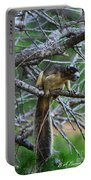 Shermans Fox Squirrel Portable Battery Charger