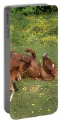 Shetland Pony And Foal Playing Portable Battery Charger
