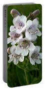 Showy Beardtongue Flower Portable Battery Charger