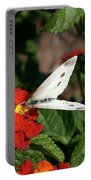 Silver Moth Portable Battery Charger