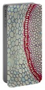 Smilax Endodermis Portable Battery Charger