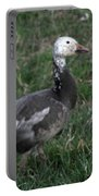 Snow Goose Blue Morph Portable Battery Charger