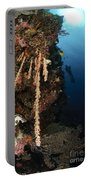 Soft Coral Reef, Indonesia Portable Battery Charger