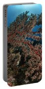 Soft Coral Reef Seascape, Indonesia Portable Battery Charger