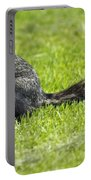 Southern Fox Squirrel Portable Battery Charger by Phill Doherty