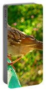 Sparrow In Morning Light  Portable Battery Charger