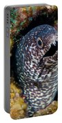 Spotted Moray Eel Portable Battery Charger