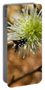 Spotted Moth On Fothergilla Portable Battery Charger