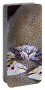 Spotted Porcelain Crab Feeding Portable Battery Charger by Steve Jones