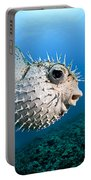 Spotted Porcupinefish Portable Battery Charger