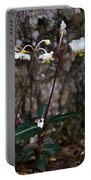 Spotted Wintergreen Plants Portable Battery Charger