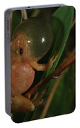 Spring Peeper Portable Battery Charger