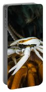 Squat Lobster Carrying Eggs, Indonesia Portable Battery Charger