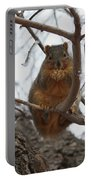 Squirrel Eating In The Frost Portable Battery Charger