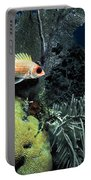 Squirrel Fish Portable Battery Charger
