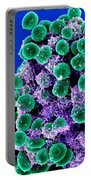 Staphylococcus Epidermidis Bacteria, Sem Portable Battery Charger