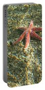 Starfish In Shallow Water Portable Battery Charger