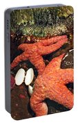 Starfish Medley Portable Battery Charger