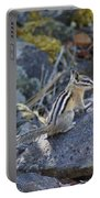 Straight Tailed Chipmunk On A Rock Portable Battery Charger