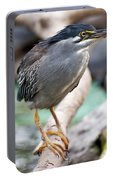 Striated Heron Portable Battery Charger