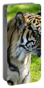 Sumatran Tiger Portrait  Portable Battery Charger
