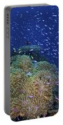 Swarms Of Small Baitfish Swim Portable Battery Charger