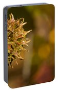 Sweetgum Seed Pod Portable Battery Charger