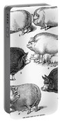 Swine, 1876 Portable Battery Charger