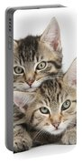 Tabby Kittens Cuddling Portable Battery Charger