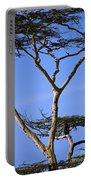 Tall Serengeti Tree And Baboon Portable Battery Charger