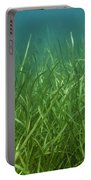 Tapegrass In Freshwater Lake Portable Battery Charger